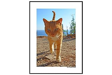 POSTER The Cat